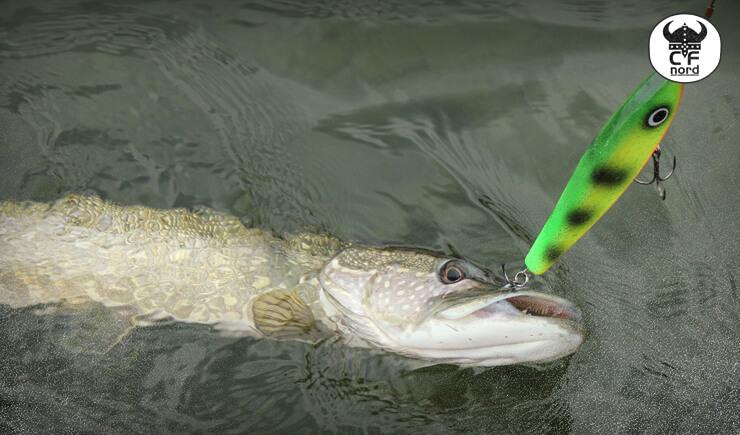 fiske jerkbaits